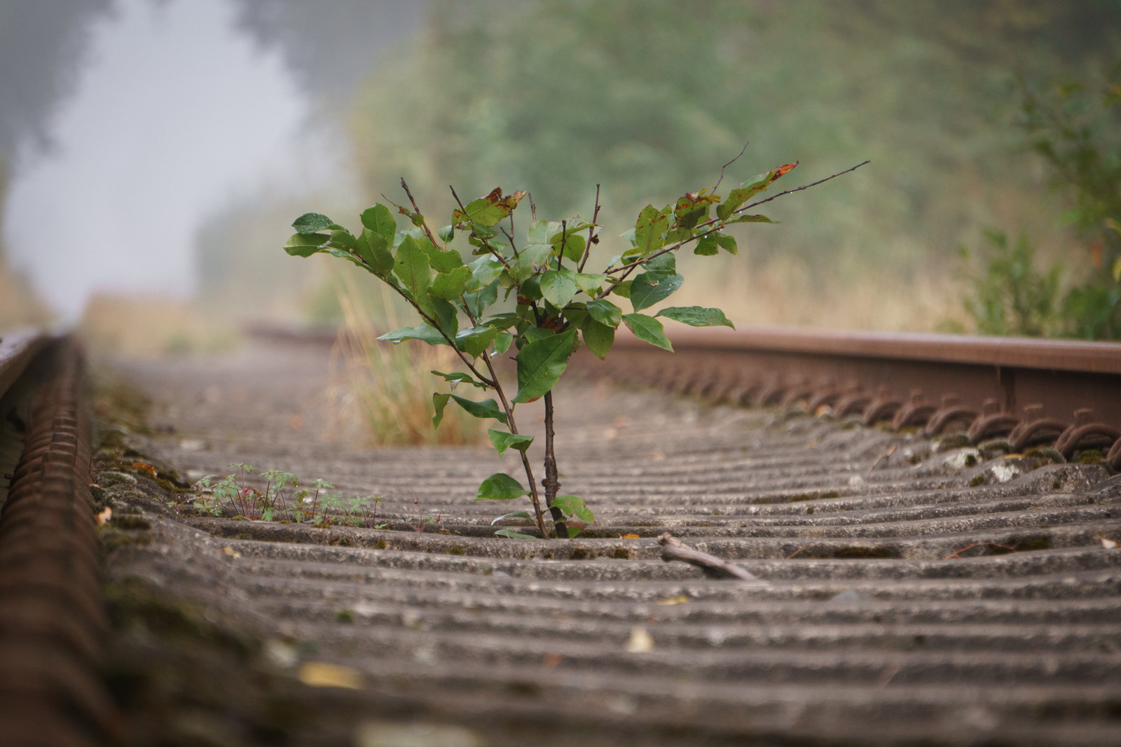 Photo of a lone plant on some railroads
