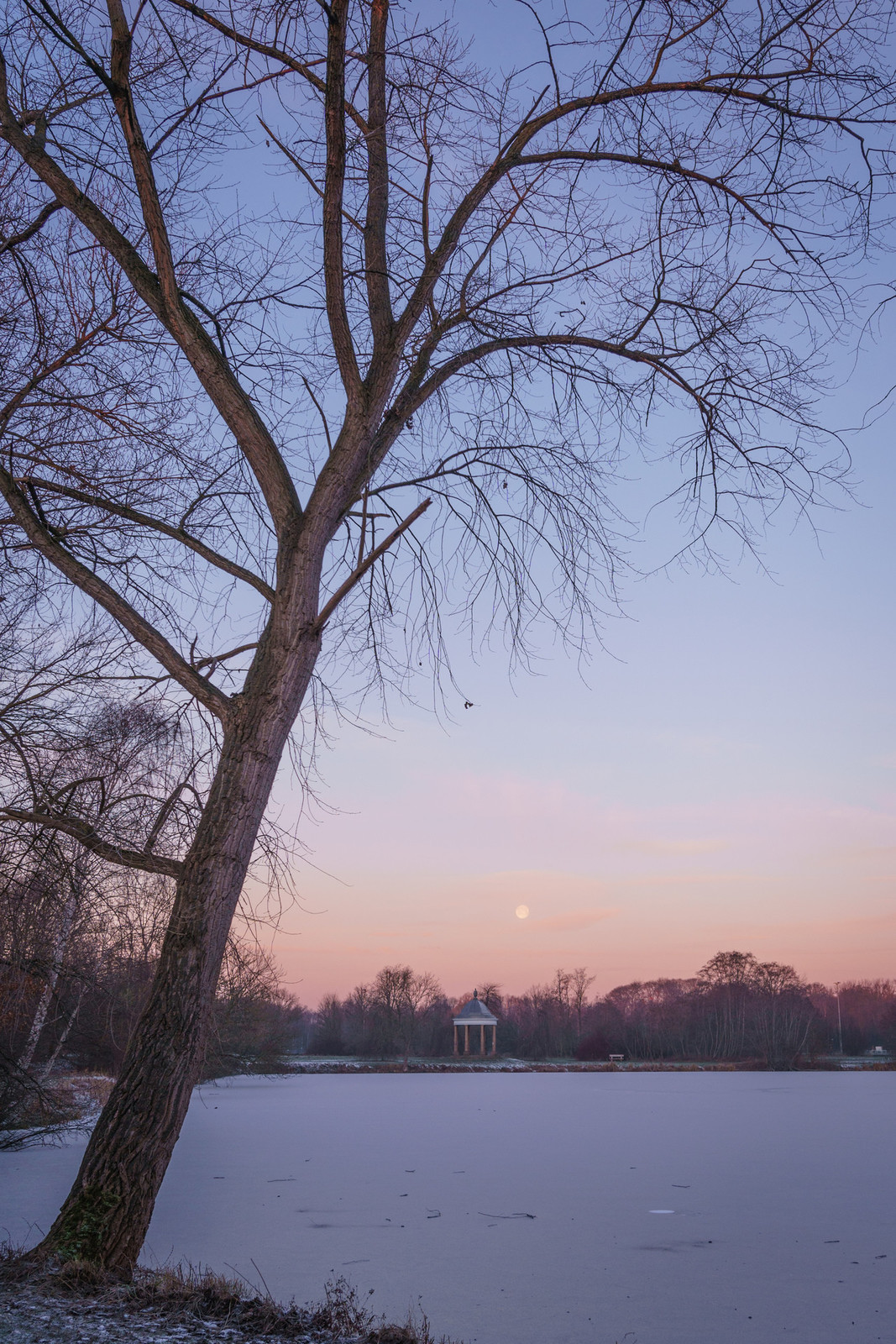 A tree at a frozen lake in Braunschweig